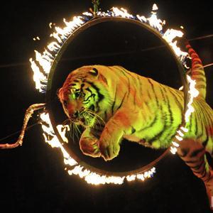 Цирки Лесного Городока