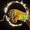 Цирки в Лесном Городке